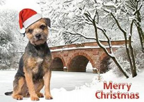 Border Terrier Christmas Card one card or a pack of five